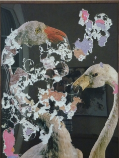 da Fauna Secreta di Joan Fontcuberta