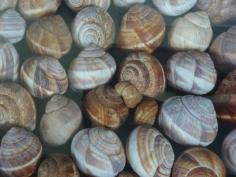 da Gastropoda di Joan Fontcuberta