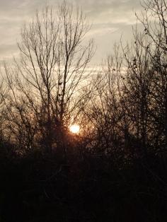 Alberi e tramonto