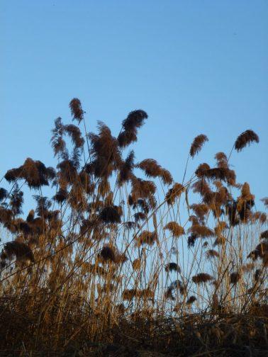 vegetazione-golena-zibello-jpeg