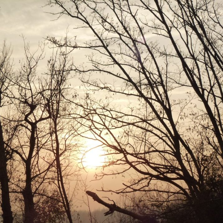 alberi-taro-inverno-jpeg