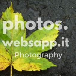 photos-websapp-it